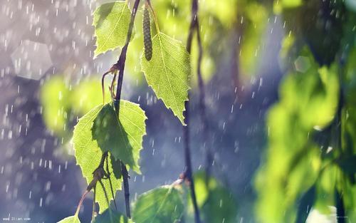 xia-rain.jpg